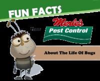 Fun facts about Eugene oregon pest contro