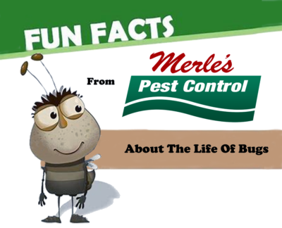 Fun facts about Eugene oregon pest contro