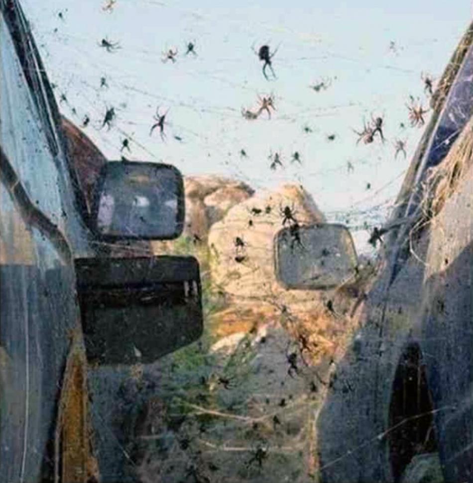 Eugene Oregon Pest control - Spiders