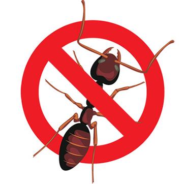 Eugene Sugar Ant Control - Art