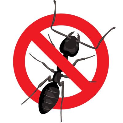 Eugene Carpenter Ant Control - exterminator