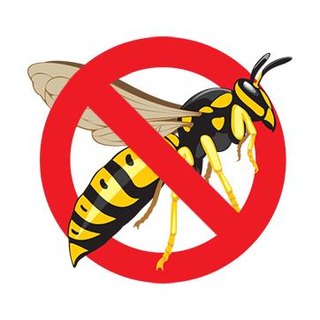 Pest Control Eugene - Wasp Art