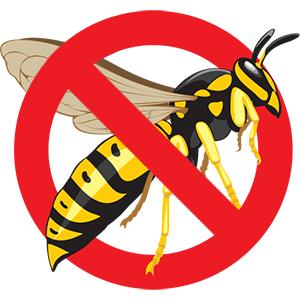Eugene Wasp Control - Exterminator