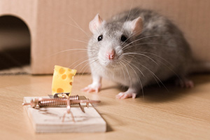 Eugene Mice Control Company Mouse Trap