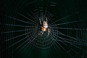 Eugene Spider Control - Arachnophobia