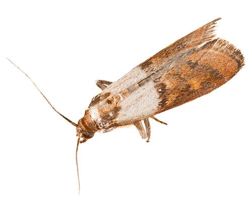 Eugene Moth Control Company - moths