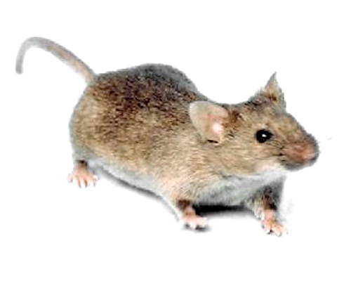 Eugene Mice Control Company
