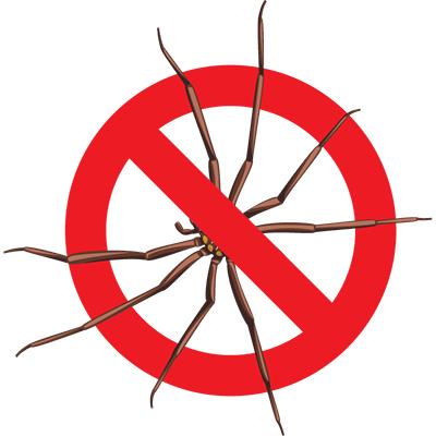 Eugene Spider Control - Exterminator